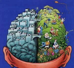 The Divided Brain